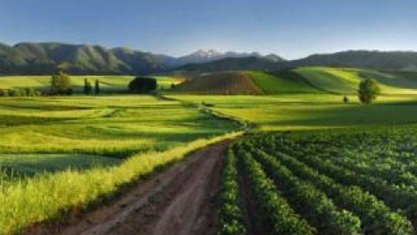 Escapadas enoturismo por la Ribera del Duero